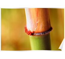 Bamboo Macro Poster