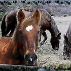 Spirit of a Horse by Judi Taylor