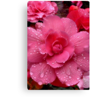 Pink And Pretty Canvas Print