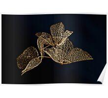 Dried Hydrangea Poster