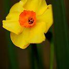 Mellow Yellow by Joe Mortelliti