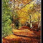 Autumn on Mousehold Heath,Norwich by Gordon Holmes