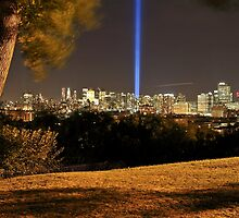 My tree at the park With 9/11 Memorial Lights by pmarella