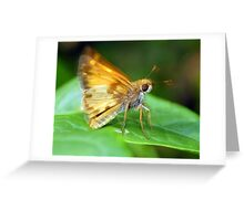 A Moth I Think Greeting Card