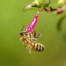 Honeybee by Jonah Gautier