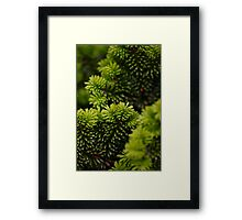green layers Framed Print