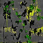 Leaves and shadows by marcopuch