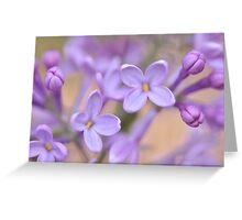 Lilac Macro, As Is Greeting Card