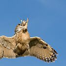 Eagle Owl Aerobatics by Matthew Walters