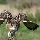 Take Off - Eagle Owl by Matthew Walters