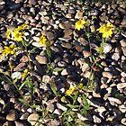Flower on the Rocks by Marc Cram