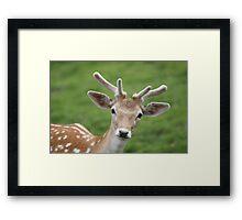 Don't stare deer! Framed Print