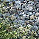 Winthrop Beach Rocks 3 by photosbycoleen