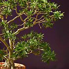 Desert Museum Bonsai by Linda Gregory