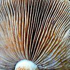 Mushroom Fan by MaeBelle