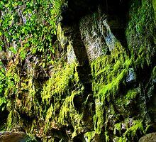 Moss Garden, Carnarvon Gorge(2) by hans p olsen