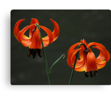 Orange lilies by the river Canvas Print