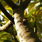 Tree lizard by Aaron Baker