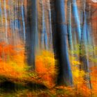 Secret forest Autumn by photojam