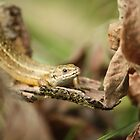 Lizard in the afternoon sun by YorkshireMonkey