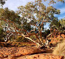 Canyon tree by PeterDamo