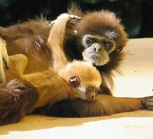 The Lar Gibbon (Hylobates lar) with baby by angeljootje