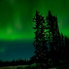An Aurora Curtain of Green by peaceofthenorth