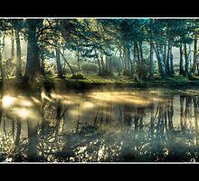 Reflections at first light - Long Pond by gypsymatt21