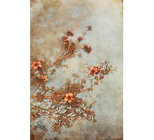 Love Is In Bloom Photographic Print