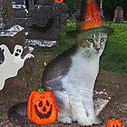 Ghost Cat by Terri Chandler