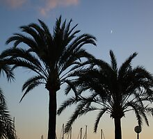 Palm trees in Palma by Esther  Moliné