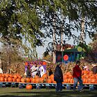 At The Local Pumpkin Farm by kkphoto1