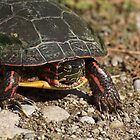 Ontario Turtle  by creativegenious