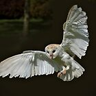 Tyto Alba by outwest photography.co.uk