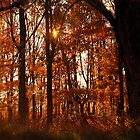 A Forest ..... Natures Sun Blinds...   by Larry Llewellyn