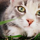 kitteh in the grass by schizomania