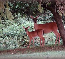 Fawn and Mom by vigor