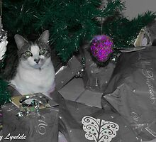 Cat in the Wrap for Christmas by snapulyndele