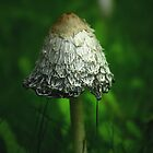 Wild mushrooms by Tarolino