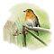 Birds Painted in Watercolor