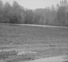 muddy field by Debra Austin