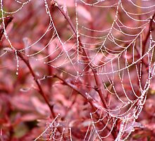 The Broken Red Web by vigor