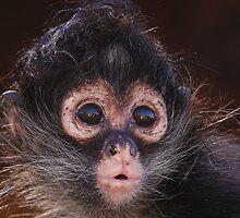 Spider Monkey baby by Alexa Pereira