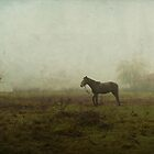 horse in the mist by Daphne Kotsiani