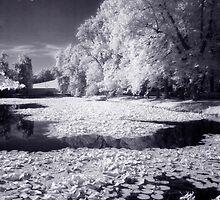Castle Park Pond II by Ethem Kelleci