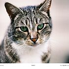 Widget The Cat by Pagani