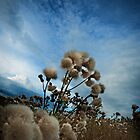 Seasons End  by Jamie  Palmer