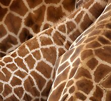 Giraffe Wallpaper by Paula McManus