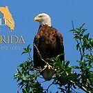 Eagles of Florida by Franklin Lindsey