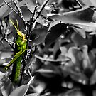 Green Hopper by Sandra Moore
